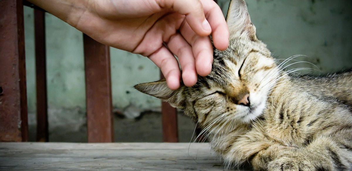 Câinii (și Pisicile) Pot Iubi