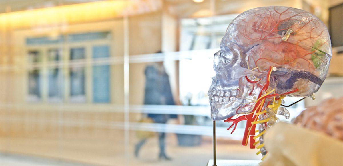 Potențialul Din Noi și Secretele Descifrate Ale Creierului Uman