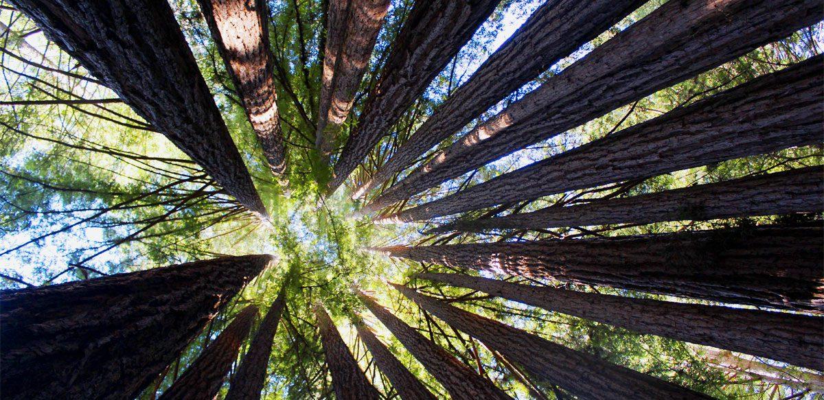 """Shinrin-yoku – """"baia De Pădure"""" Sau  Modalitatea De A Ne Reconecta Cu Natura"""